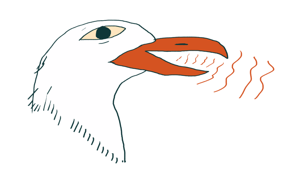 illustration of a seagull