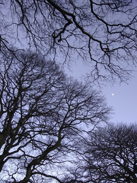 """We are pleased to welcome Antony Pipe's photographs back to the exhibition for a second year running.   """"A walk down the path and back. I took these moonshots near Exeter between 4.09pm and 5.10pm on 22nd January 2021 on my smartphone. I think Covid has turned me on to looking at the sun, the moon and the clouds in the sky for nourishment in the absence of other things."""""""